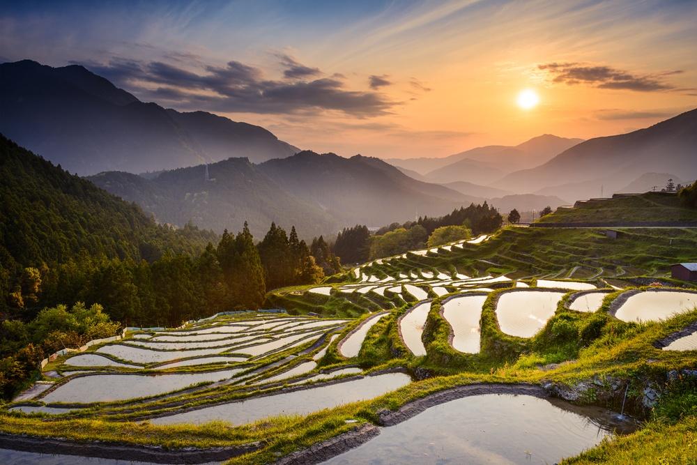 Japanese rice terraces at sunset. Maruyama-senmaida, Kumano, Japan..jpeg
