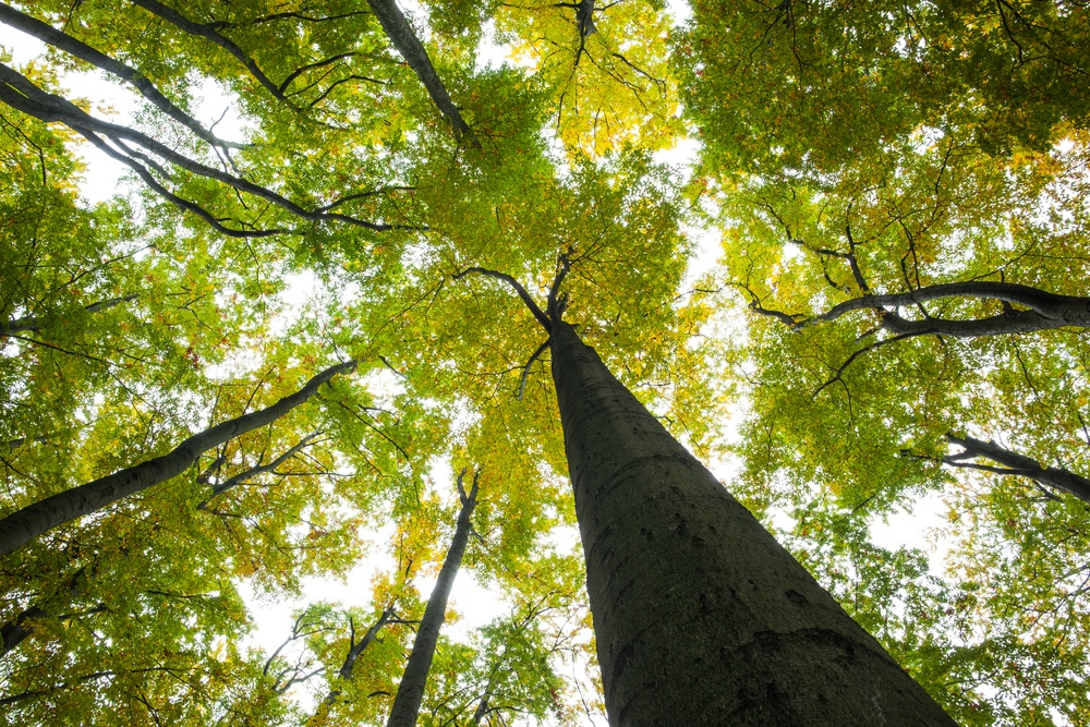 Low angle view of tall trees against the sky.jpeg