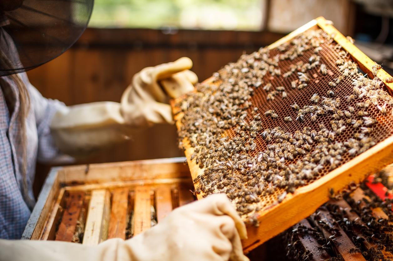 Honey Scandal